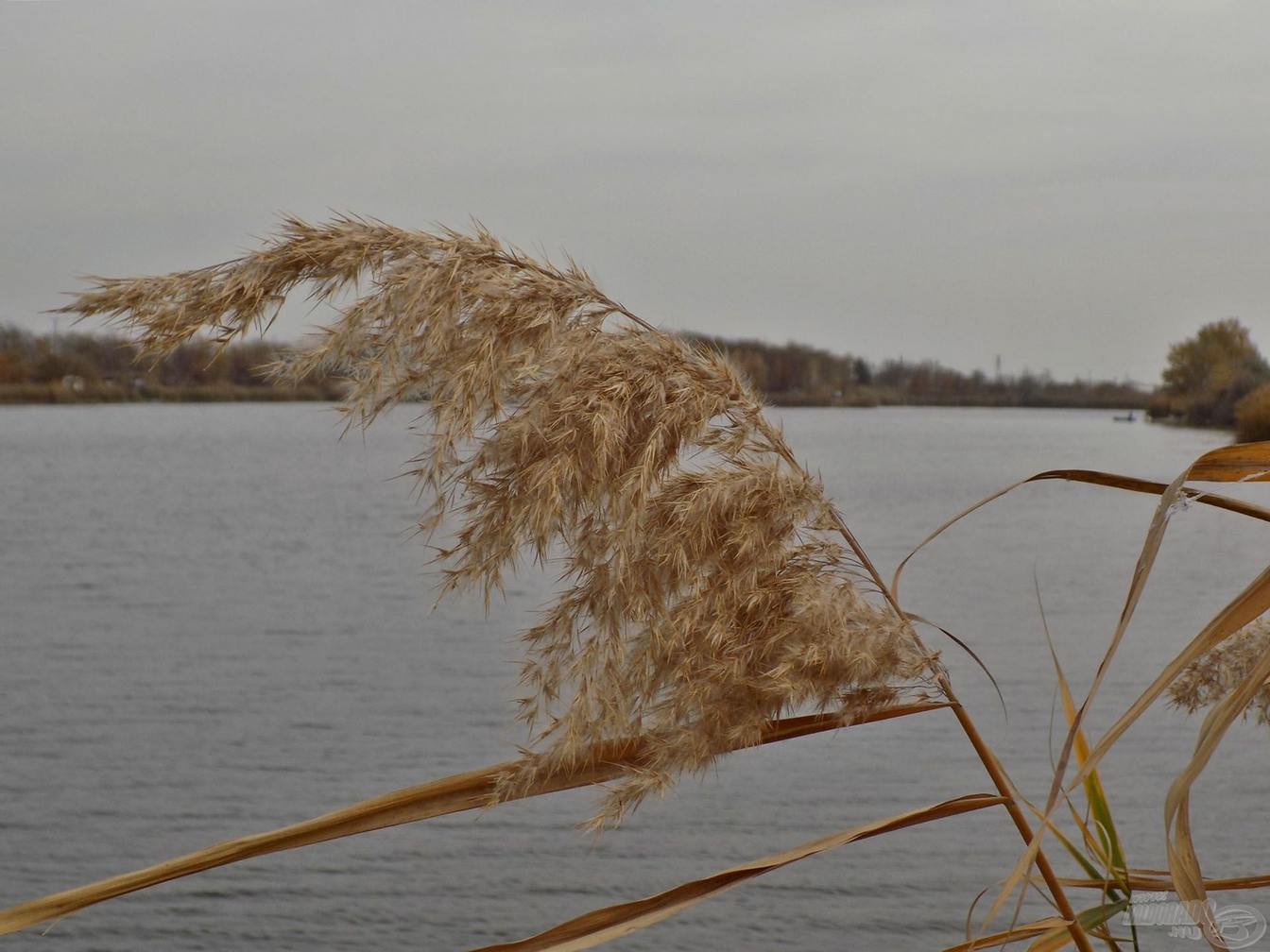feederove tipy v studenej vode